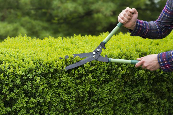 servicios-mas-comunes-en-jardineria